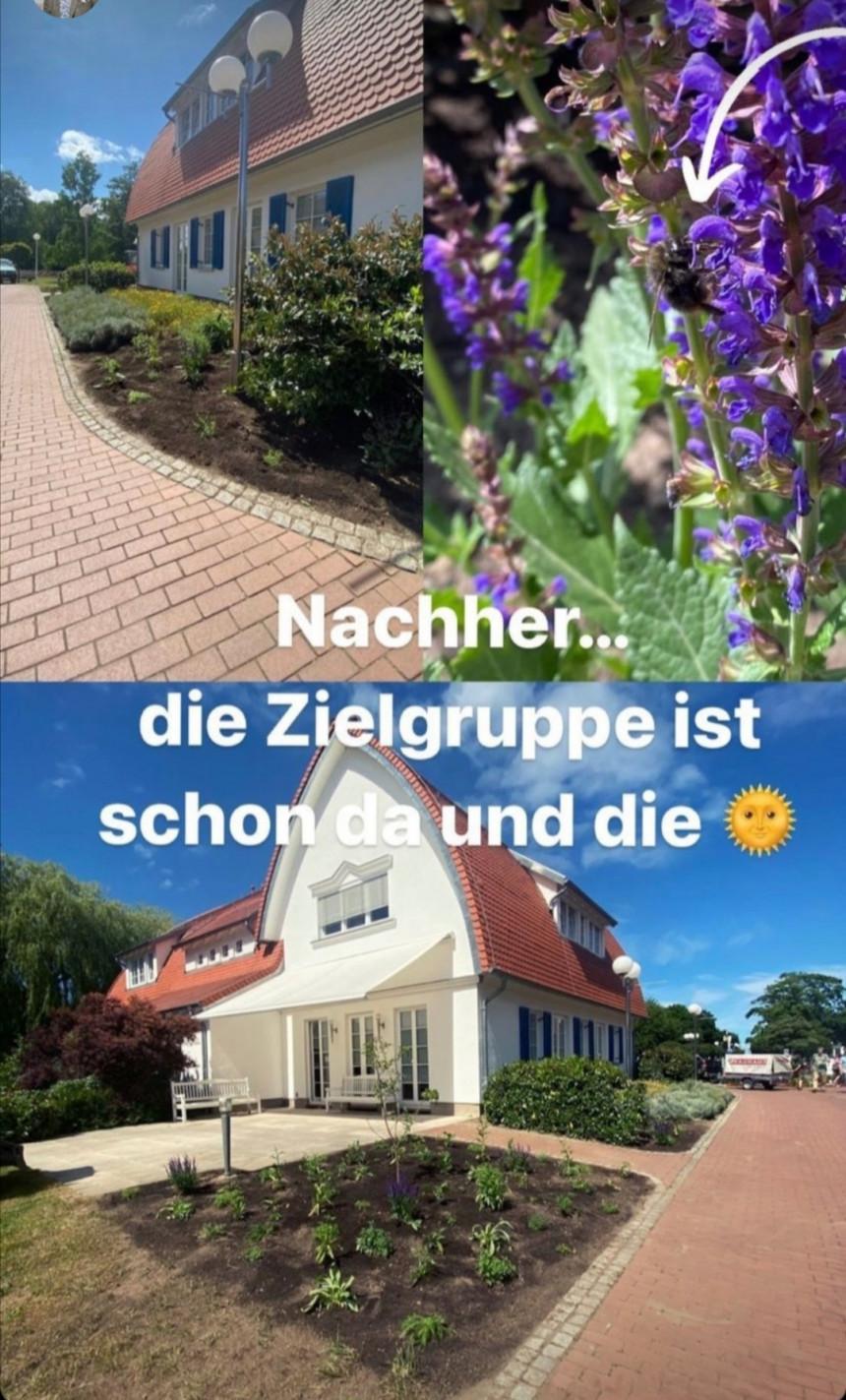 Bepflanzung am Kurhaus-Boltenhagen wird Bienen & Insektenfreundlich